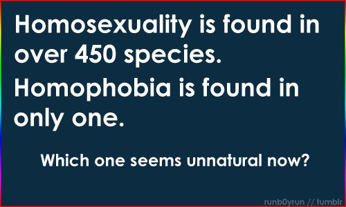 Note to homophobes.: Equality, Stuff, Quotes, 450 Species, Truth, Gay, True, Thought, Things
