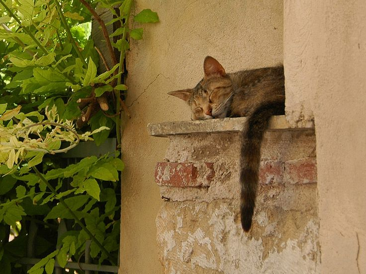 ãsleeping dogs and cats in greeceãã®ç»åæ¤ç´¢çµæ