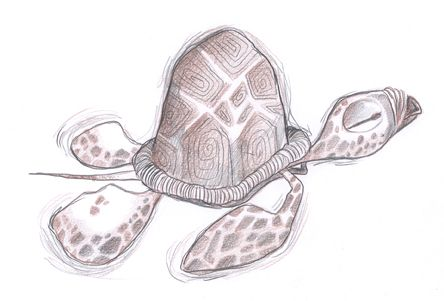 turtle Marcos Llussá llussa.blogspot.com