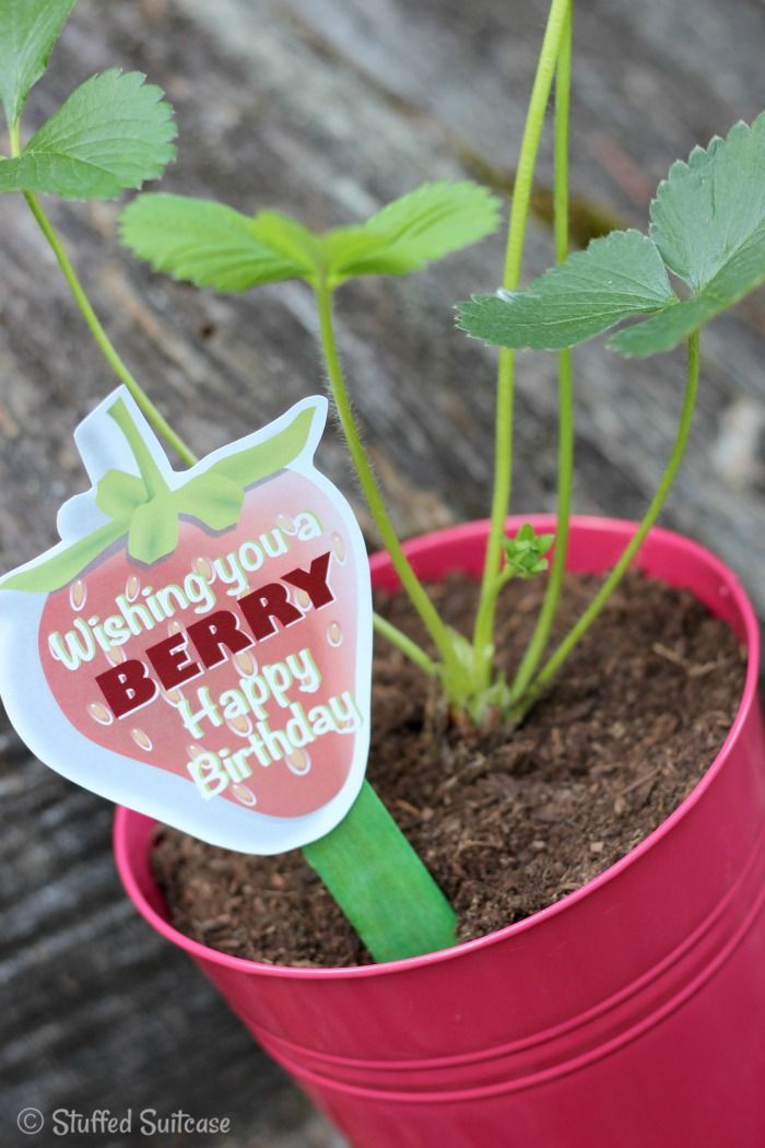 Strawberry Plant Gift With BERRY Free Printable