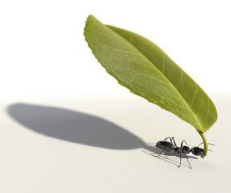 If you have a problem with ants in the house, here are some recipes and tips for getting rid of them.
