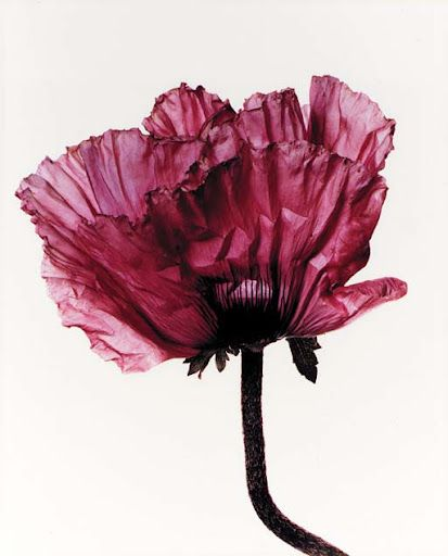 Photography by Irving Penn.