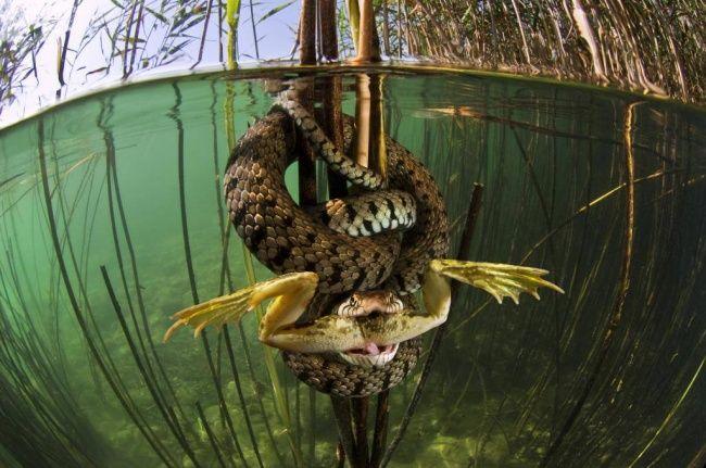 Развлечения каждый день - 30 снимков месяца, в которые трудно поверить #photo #photographie #photographer #photography #photographe #OlivierOrtion #MontierenDer #wildlifephotography #wildlife