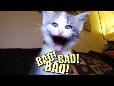 I'm now a fan of Sylvester the Talking cat... Clever and funny!  Talking Kitty Cat 44 - BAD! BAD! BAD! - YouTube