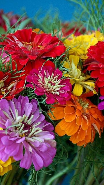 I love Zinnias too!  Zinnias are WAY UP HIGH on my list of loves!!!