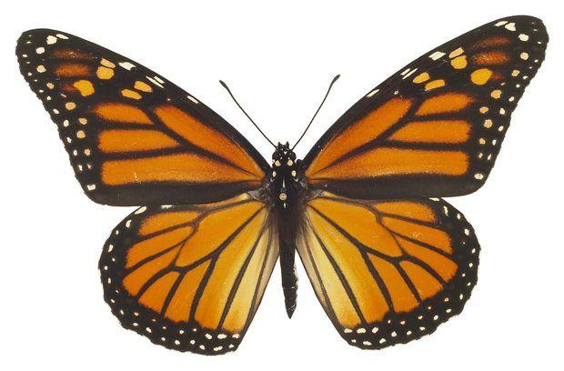 Como fazer uma borboleta de penas