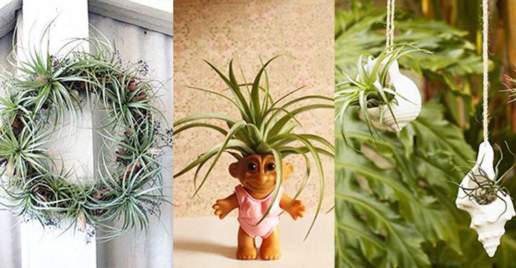 Snygga, lättskötta och får plats överallt. Intresset för luftplantor växer som ogräs. Här får du 11 oemotståndliga idéer för dessa fantastiska luftrenare som varken kräver jord eller gröna fingrar.