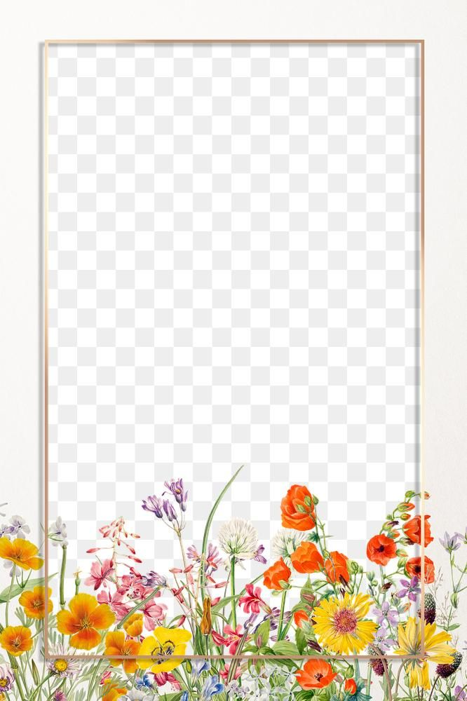 Floral Frame Png Blooming Flowers Illustration Drawing Free Image By Rawpixel Com Eyeeyeview Flower Illustration Flower Frame Illustration