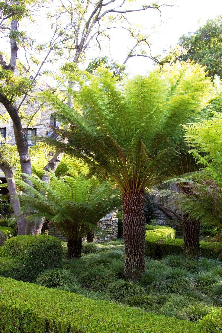 best 25 tree fern ideas on pinterest lush australia fern