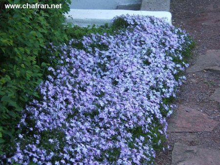 Fleurs vivaces | Trucs et Conseils | Jardinage facile