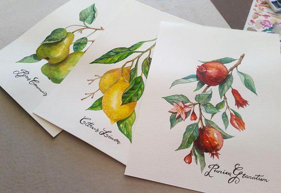 Fruit Botanicals Original Watercolour Painting Set of 3 hand
