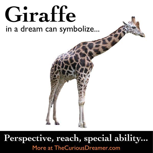 69 Best Dream Interpretation Images On Pinterest Dream Dictionary