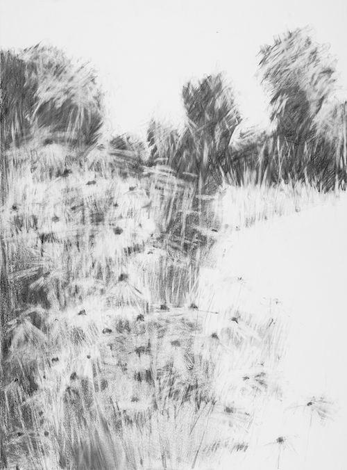 Hannah Woodman: Garden Drawings : Kestle Barton ... Eraser charcoal drawings