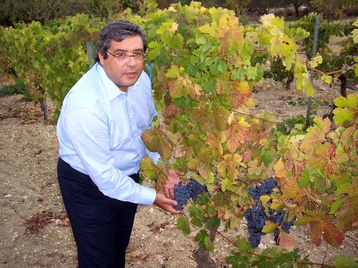 Elezioni Regionali in Sicilia.  Sono Cuffaro e faccio il vino