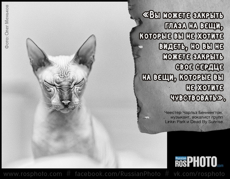 #photo #quoted #aphorism #thought #cat