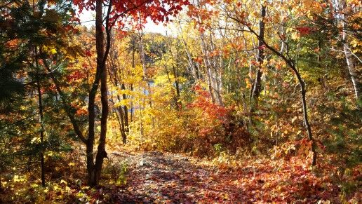 Colours were just spectacular yesterday at the Conservation  Area in Sudbury.
