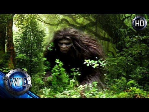 (354) IS BIGFOOT ACTUALLY STALKING HUMANS FROM OUR VERY OWN BACK YARDS? - YouTube