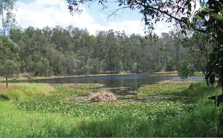 Enoggera Reservoir (have you visited yet?) #EvertonPark #VilageBuzz #McDowall #Stafford #StaffordHeights #MadeleineHicksRealEstate #EvertonParkRealEstate #McDowallRealEstate #StaffordRealEstate #StaffordHeightsRealEstate #BrisbaneRealEstate