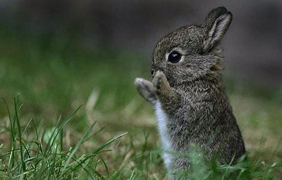 Baby bunny rabbit   animals