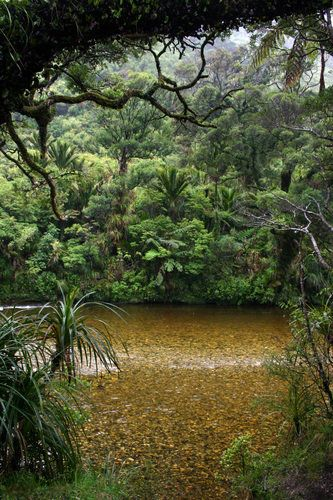 Paparoa in New Zealand. | Stunning Places #Places