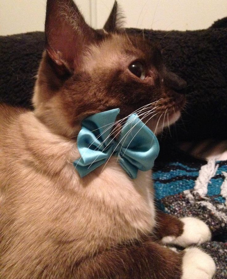 I made a silk bow tie for Coco yes or no :) http://ift.tt/2nFhpRQ