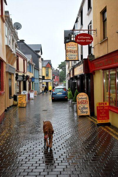 Killarney  One of my favorite places in Ireland, LOVED Killarney...