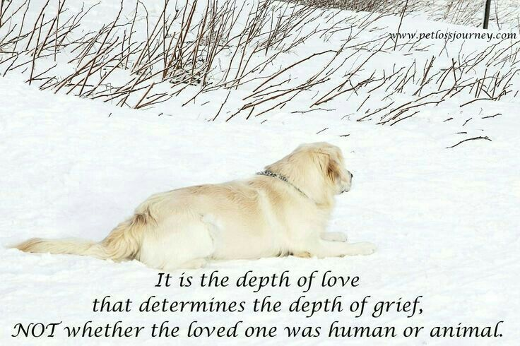 It is the depth of love that determines the depth of grief, NOT whether the loved one was human or animal.
