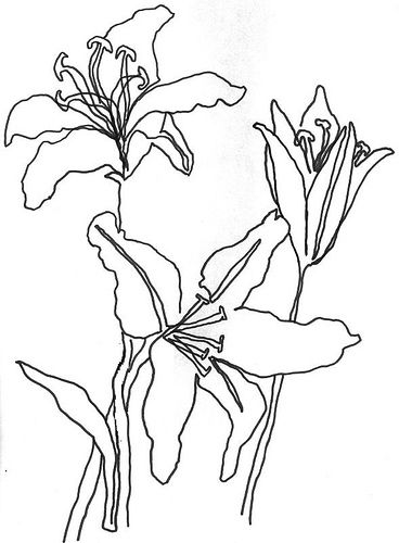 Line Art Aplic Flower Design : Black and white line drawings of flowers pixshark