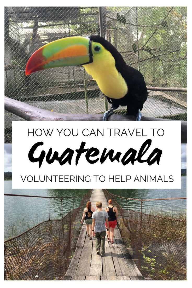 I M Volunteering In Guatemala Helping Animals And You Re Invited Guatemala Travel Central America Travel Central America Destinations