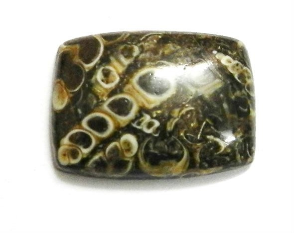 Cushion cut rectangle of fossil agate