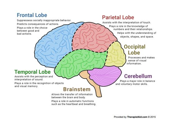 The 25 best human brain parts ideas on pinterest brain parts the human brain diagram preview ccuart Images