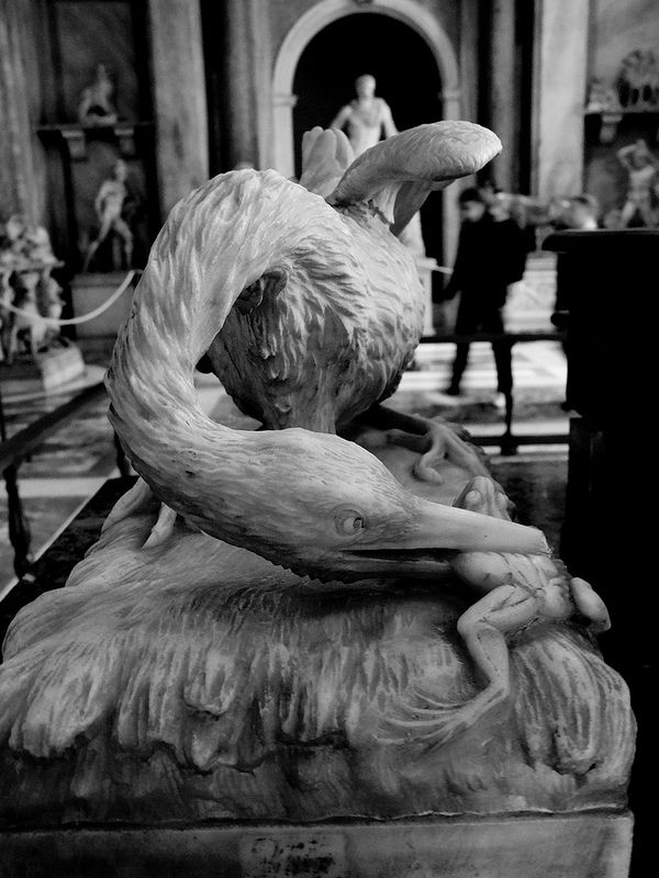 Bird photographing in the Vaticans #fujifilm #fujifilmx10