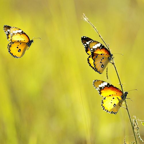 How math and butterflies can help children learn music.