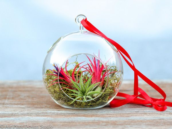 Shop air plant gifts and terrariums from Air Plant Design Studio.