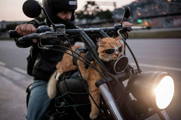 Venture Heat® manufactures motorcycle Heated Jacket Liners - Heated Motorcycle Gear - Heated Gloves - Heated Mittens - Heated Motorcycle Pant Liners - Heated Vests - Heated Sweaters - Heated Hoodies