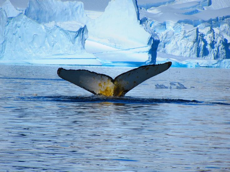 We love whale pictures like this one. You only see the tail of the whale, but you can imagine what's going on  below the surface.