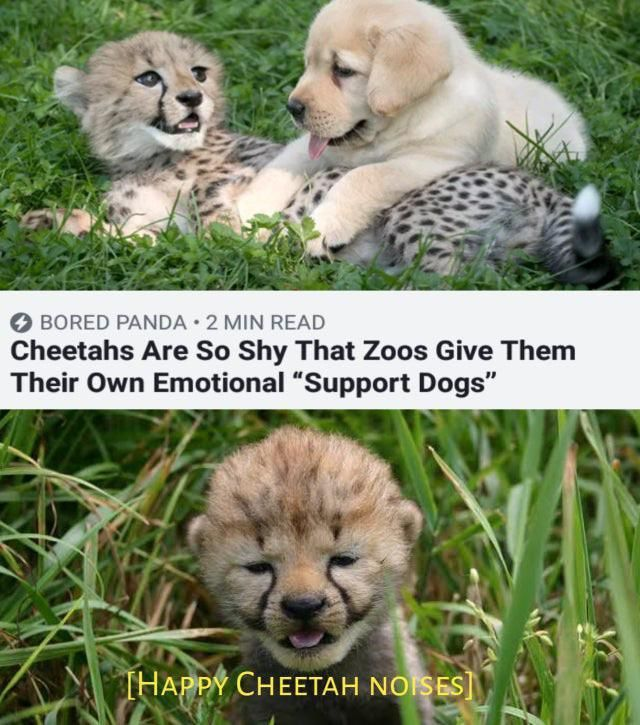 50 Wholesome Clean Memes That Bring The Feels Cute Animals Cute Baby Animals Funny Animals