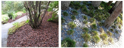 Ground Cover   Essential to cover soil with mulch, bark or pebbles etc, to keep in moisture and the weeds at bay.
