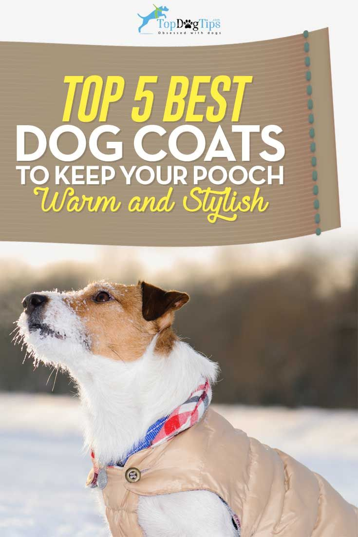 Top 5 Best Dog Coats for Dogs in Winter Cold and Rain (2016 Update). Some pet owners think that dressing their canines into winter dog coats is only for style, because dogs have their own coats for warmth. That is not true, however, and vets warn how important it is to keep our pets warm. As such, we've looked around to find the five best dog coats for winter and rain. #dogs #winter #autumn #rain #dogcoats #weather #pets