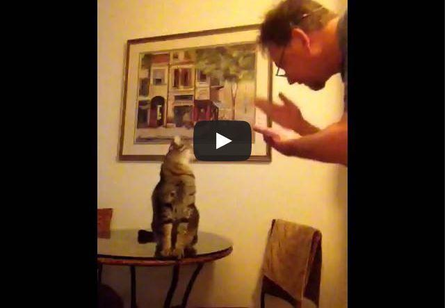 Chico è un gatto sordo. Lui e il suo papà umano conversano attraverso il linguaggio dei segni.