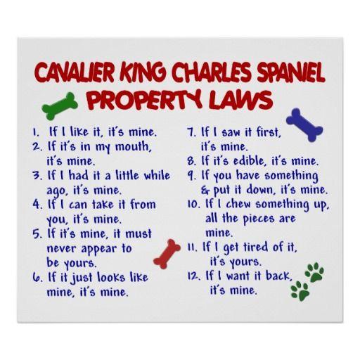 CAVALIER KING CHARLES SPANIEL PL2 POSTER