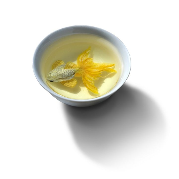 Best Riusuke Fukahori Images On Pinterest Goldfish D - Incredible 3d goldfish drawings using resin