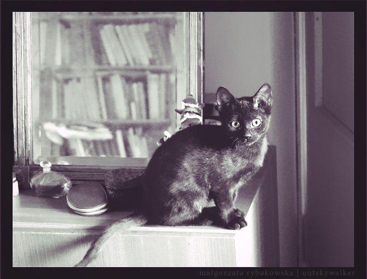 Crazy #Cat Lady by *outskywalker on deviantART