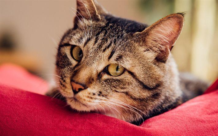Lataa kuva kissa, lemmikit, söpöjä eläimiä, kissat