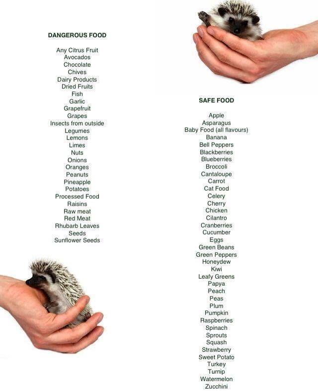Hedgehog food dos & don'ts