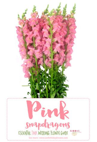 All flower names with pictures holly dictionary of flower essential pink wedding flowers guide names seasons pics mightylinksfo