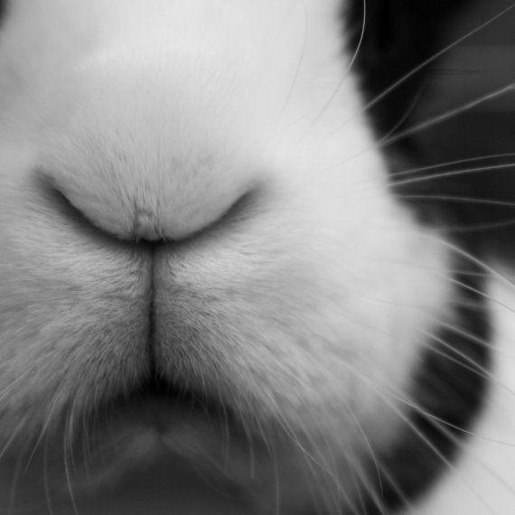 Black and White Bunny Photograph 8x8 Altered Art Print Rabbit