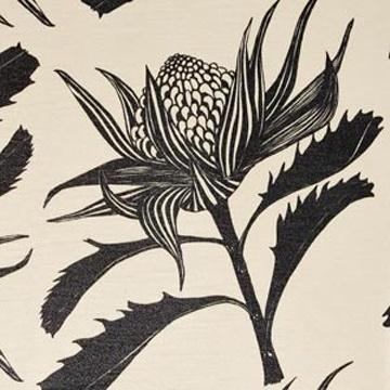 Print - Waratah - Black White