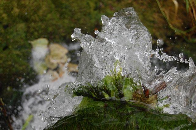 Photo : Fleur d'eau,  Cascades, Iteuil. Toutes les photos de Patrice PLANTUREUX sur L'Internaute