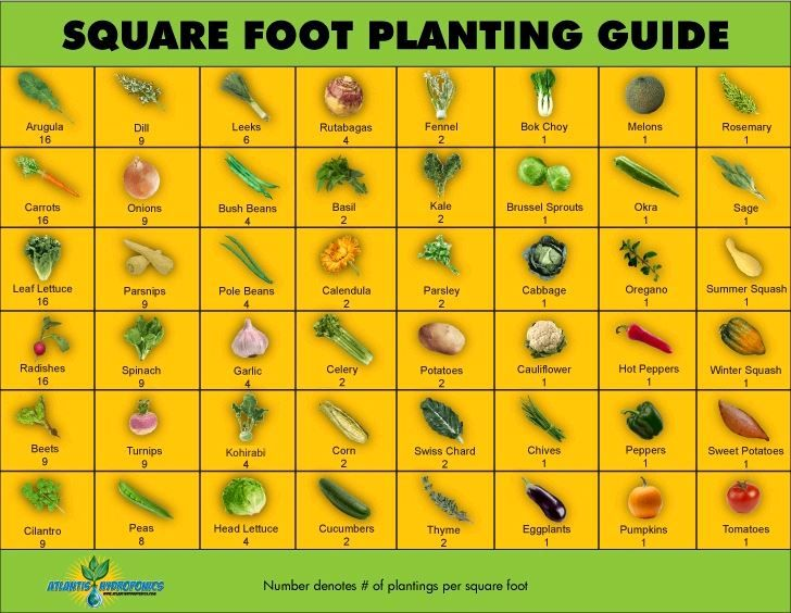Square Metre Gardening Planting Guide